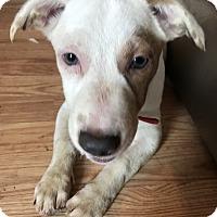 Adopt A Pet :: Cisco - East Windsor, NJ