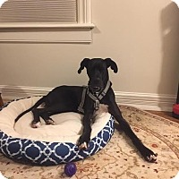 Adopt A Pet :: Theo/Teddy - Columbus, OH