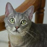 Adopt A Pet :: Babe - DFW Metroplex, TX
