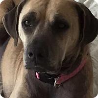 Adopt A Pet :: Abby 2 - Tampa, FL