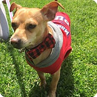 Adopt A Pet :: Kobe! - New York, NY