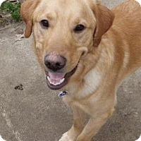 Adopt A Pet :: Nate - Beachwood, OH