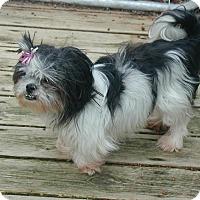 Adopt A Pet :: Elsa - Homer Glen, IL