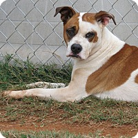 Adopt A Pet :: Ginger - Marble Falls, TX