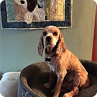 Adopt A Pet :: Wyatt-ADOPTED! - Sacramento, CA