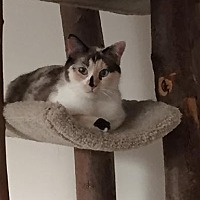 Adopt A Pet :: Mariam - Pinckney, MI