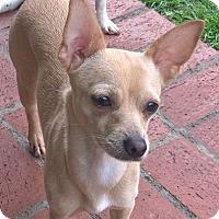 Adopt A Pet :: Taya - Aqua Dulce, CA