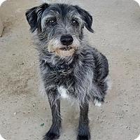 Adopt A Pet :: Smokey - Palm Springs, CA