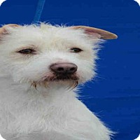 Adopt A Pet :: GEORGIE - Pearland, TX