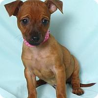 Adopt A Pet :: Selena - Kerrville, TX