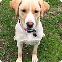 Adopt A Pet :: Bob - no longer accepting appl - Manchester, NH