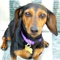 Adopt A Pet :: Lexie - San Jose, CA
