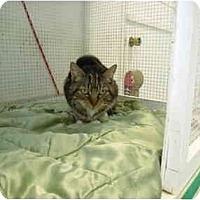 Adopt A Pet :: Pumpkin - El Cajon, CA