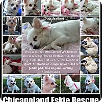 Adopt A Pet :: Renee - Elmhurst, IL