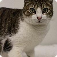 Adopt A Pet :: Henry - Sacramento, CA