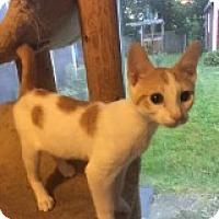 Adopt A Pet :: Candi - Delmont, PA