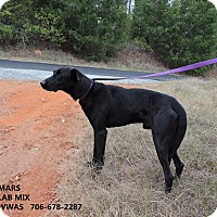 Labrador Retriever Mix Dog for adoption in Washington, Georgia - Mars