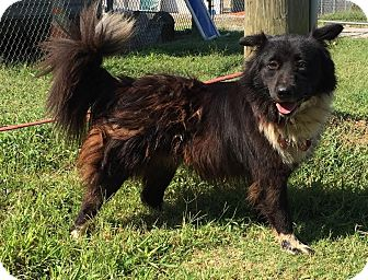 Border Collie Mix Dog for adoption in Sagaponack, New York - Lady