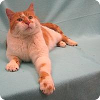 Adopt A Pet :: Dannie - Redwood Falls, MN