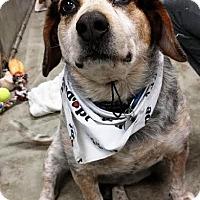 Adopt A Pet :: Buddy - Kalamazoo, MI