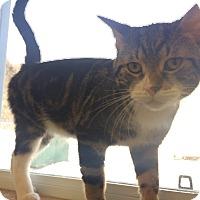 Adopt A Pet :: Stewie - Elliot Lake, ON