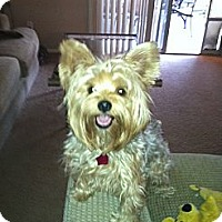 Adopt A Pet :: Andy - Goodyear, AZ