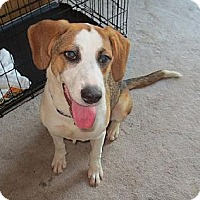 Adopt A Pet :: Lucy - Schererville, IN