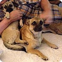 Adopt A Pet :: Dakota - Anaheim, CA