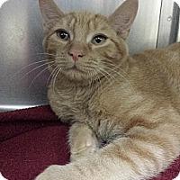 Adopt A Pet :: Chris Evans - Richboro, PA