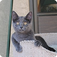 Adopt A Pet :: Brandi - Palmdale, CA