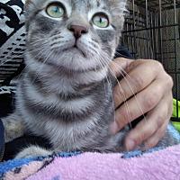 Adopt A Pet :: Tampon - Benton, PA