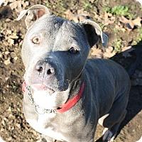 Adopt A Pet :: Chloe - Sacramento, CA