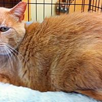 Adopt A Pet :: Seamus - Tampa, FL