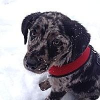Adopt A Pet :: Lance - PENDING - kennebunkport, ME