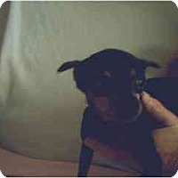 Adopt A Pet :: Minnie - Swiftwater, PA