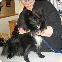 Adopt A Pet :: Sammie - Johnsburg, IL