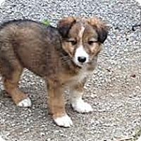 Adopt A Pet :: Puppies 2 Males/2Females - Hamilton, ON