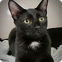 Adopt A Pet :: Frank - Seminole, FL