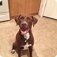 Adopt A Pet :: Silas - Fort Valley, GA