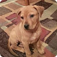 Adopt A Pet :: Ginger - Marlton, NJ