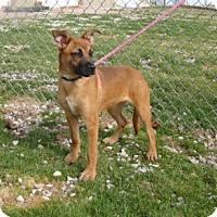 Adopt A Pet :: ROSIE - Henderson, KY