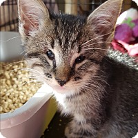 Adopt A Pet :: Lacey - Berkeley Hts, NJ