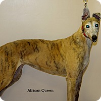 Adopt A Pet :: Queenie (African Queen) - Cottonwood, AZ