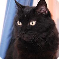 Adopt A Pet :: Clara - Winchendon, MA