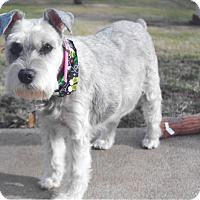 Adopt A Pet :: Maddy - Sharonville, OH