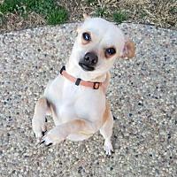 Adopt A Pet :: Tony - Dallas, TX