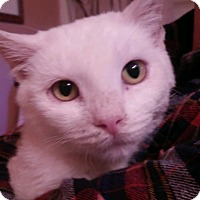 Adopt A Pet :: AURORA - Mesa, AZ