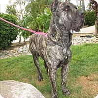 Adopt A Pet :: Rocko - Auburn, WA