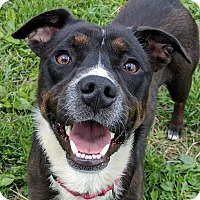 Adopt A Pet :: Carlos - Lisbon, OH