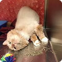 Adopt A Pet :: Tipper - Worcester, MA